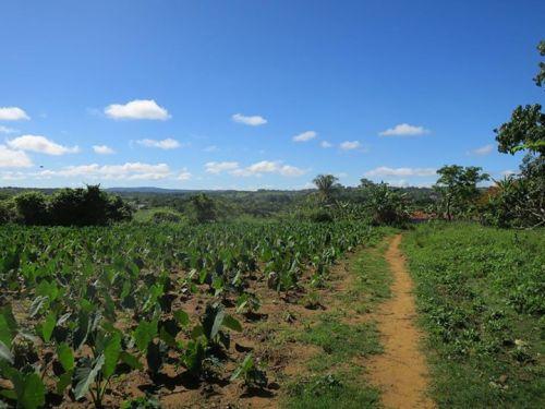 古巴農村一景。